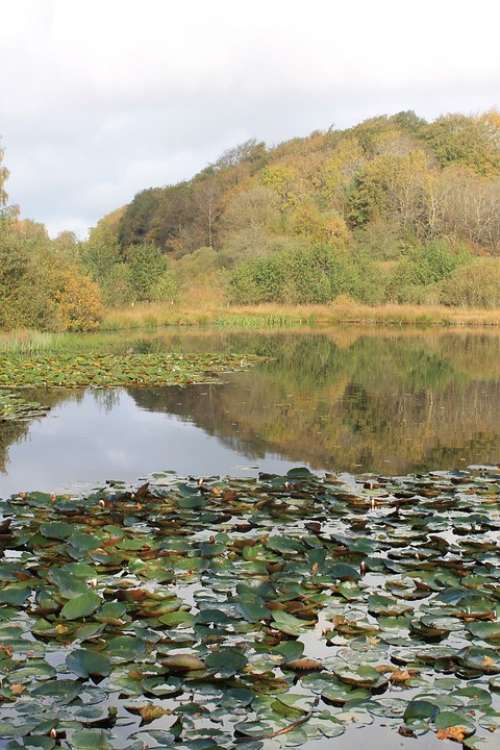Lake Denmark Pond Reflections Autumn Water