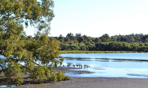 Lake Water Landscape Bird Reflection Australia