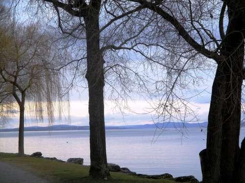 Lake Bank Trees Abendstimmung Color Idyllic