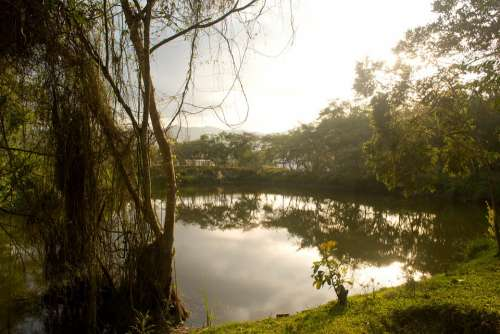 Lake Colombia Landscape Forest
