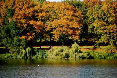 Lake Water Trees Forest Autumn Forest Colorful