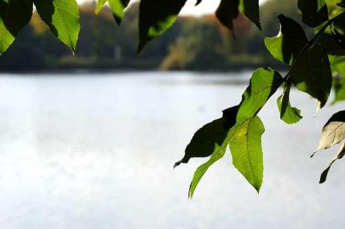 Lake Water Tree Leaves Gelsenkirchen Berger Lake