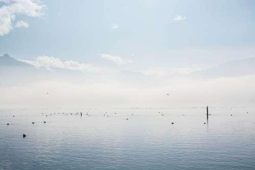 Lake Clouds Fog Water Wave Rest Ducks Animals