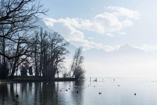 Lake Clouds Fog Water Rest Ducks Animals Birds