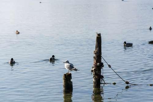 Lake Gmunden Traunsee Mirroring Fog Nature Water