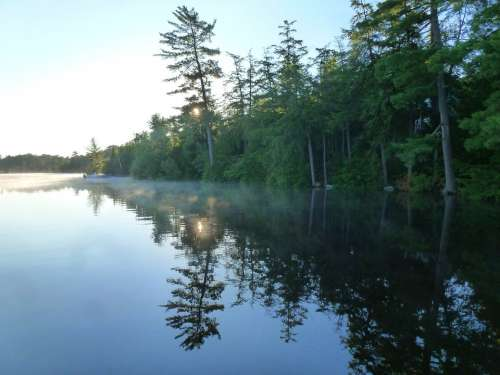 Lake Shore Reflection White Pine Morning Mist