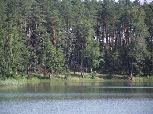 Lake Masuria Ducks Water Pond