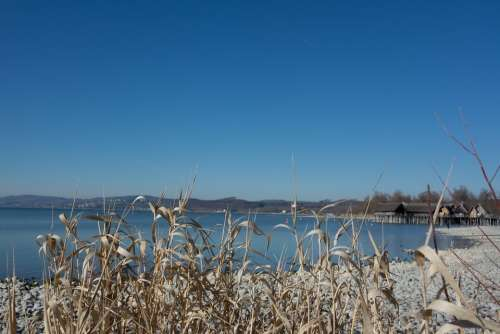 Lake Constance Water Beach Reed
