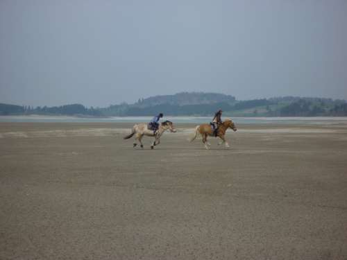 Lake Forggensee Horses Ride Nature Animals