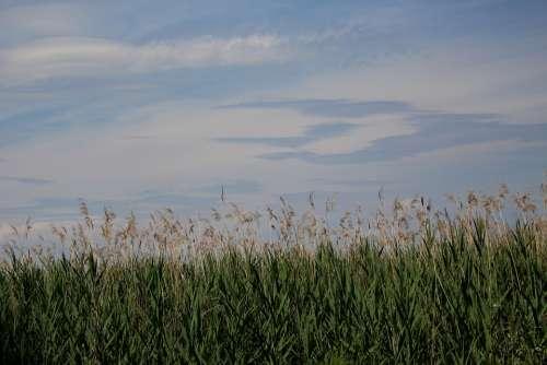 Lakeside Reed Afternoon Atmosphere Sky Clouds