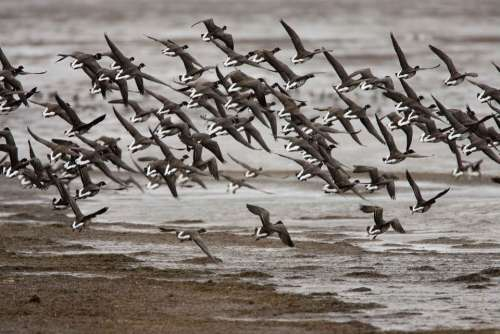 Landing Prepare Flock Birds Animals Fauna