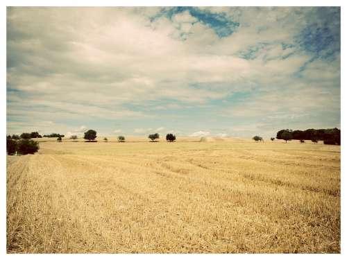 Landscape Trees Fields Straw Sky Blue Yellow