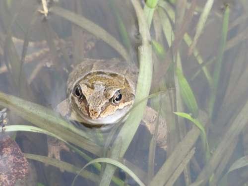 Landscape Animal Frog Water Pond