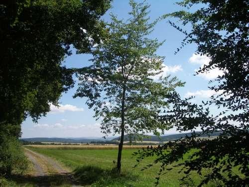 Landscape Nature Lane