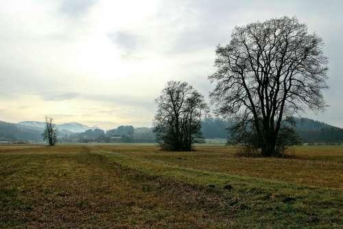 Landscape Upper Bavaria Mood Trees Wide Distant