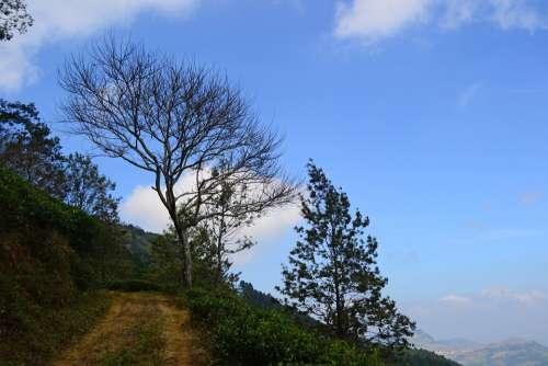 Landscape Tree Dead Tree Dried Tree Blue Sky