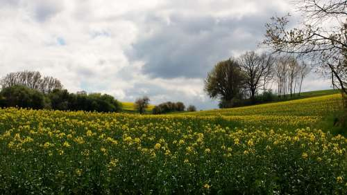 Landscape Meadow Sky Clouds Idyll Rest