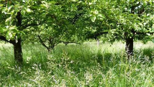 Landscape Meadow Trees Spring Green Rest Nature