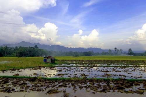 Landscape Natural Rice Field Nature Beautiful Sky