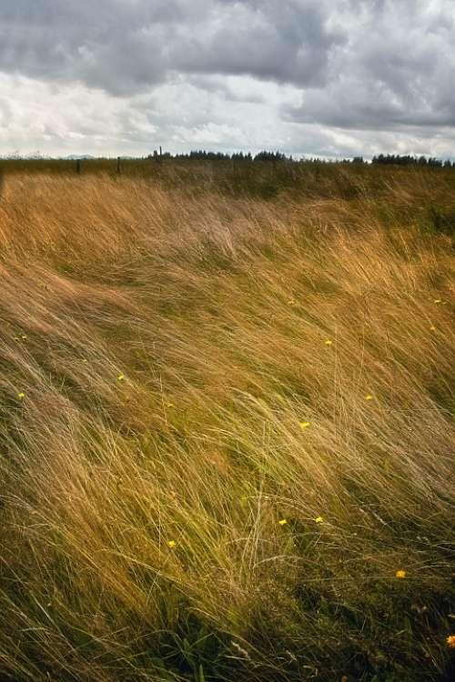 Landscape Grass Windy Clouds Storm Mood Meadow