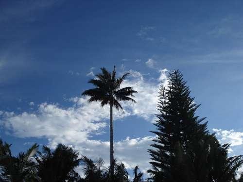 Landscape Palma Tree Sky Clouds