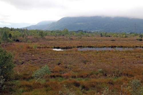 Landscape Heide Moor Swamp Nature Autumn