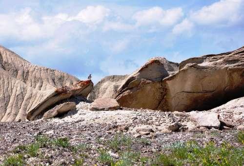 Landscape Rocks Bird Nature Peaceful Outdoor
