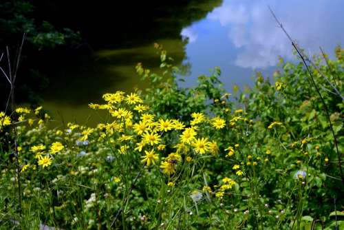 Landscape Lake Flowers Forest Water Reflection