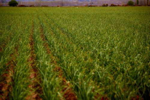 Landscape Plantation Field Agriculture Earth