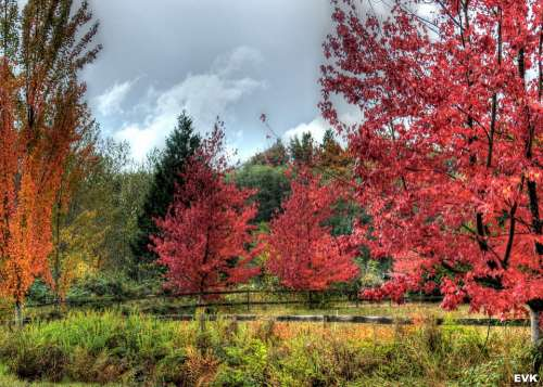 Landscape Vibrant Red Trees Autumn Yellow