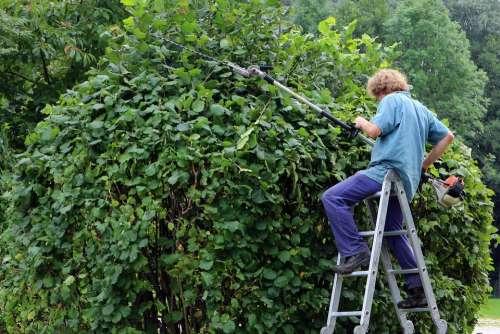 Landscape Gardener Gardener Workers Garden Hedge