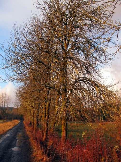 Lane Road Country Trees Landscape Farm