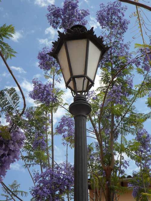 Lantern Jacaranda Mediterranean South Blossom Lamp