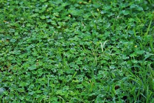 Lawn Grass Green Drops Rain Glistening