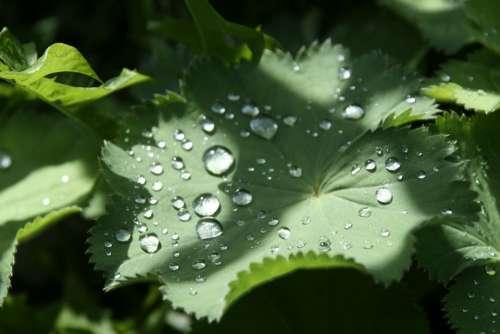 Leaf Drip Green Plant