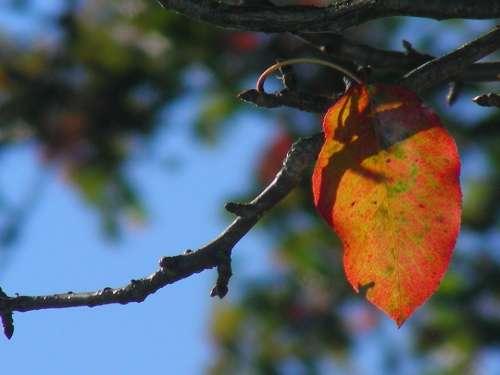 Leaf Autumn Colorful Colored Nature Autunm