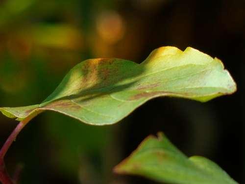 Leaf Green Leaf Natural Autumn Macro Garden