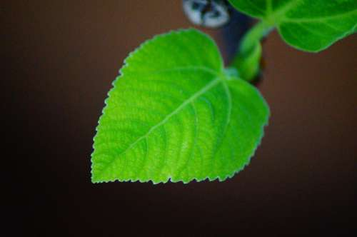 Leaf Growing Plant Leaves Colorful Nature Green