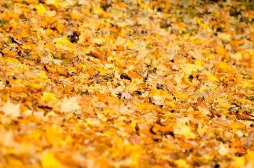 Leaf Leaves Background Autumn Seasons Nature