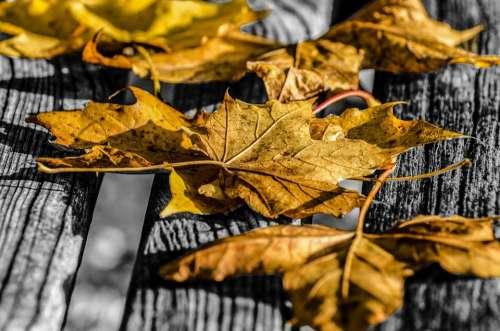 Leaf Leaves Autumn Seasons Nature Natural Colored