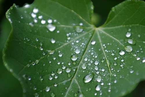 Leaf Green Nature Drops Of Water