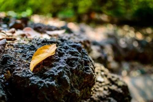 Leaf Fall Autumn Rock Lava Rock Old Nature