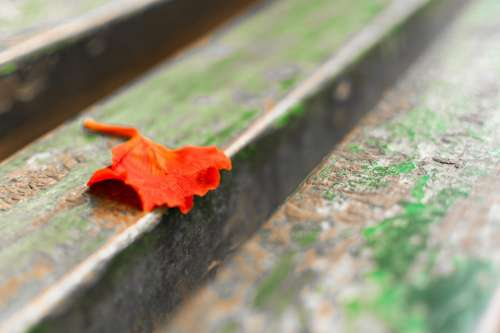 Leaf Leaves Red Orange Park Bench Petal Blurry