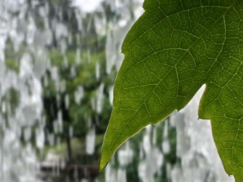 Leaf Nature Waterfalls