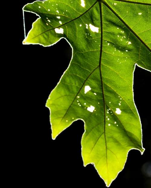 Leaf Green Nature Plant Environment Ecology