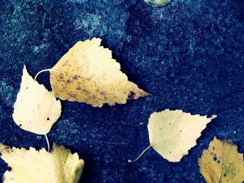 Leaf Foliage Nature Plant Garden Autumn Blue