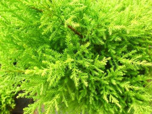 Leaf Plant Nature Green Natural Spring Fresh