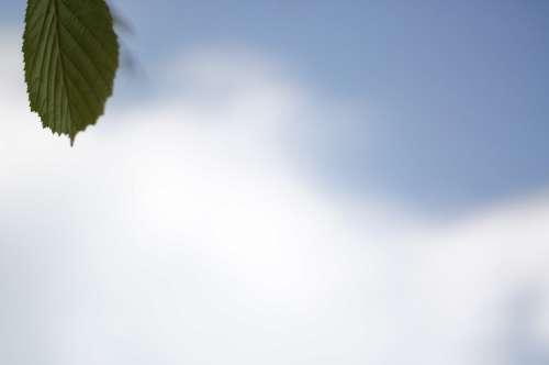 Leaf Sky Cloud Nature Mood