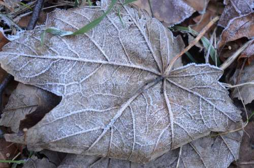 Leaf Winter Frozen Cold Frost Snow