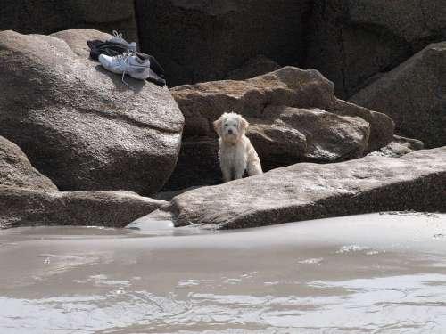 Abandoned Lonely Wait Good Dog Master Beach Rock